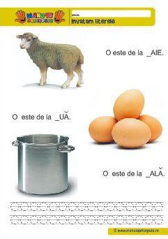 Litera O