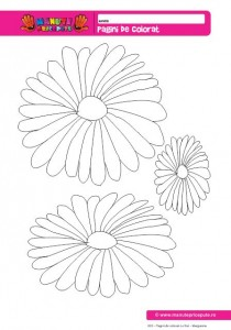 003 - Pagini de colorat cu flori - Margarete.pdf