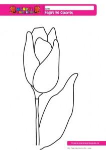 004 - Pagini de colorat cu flori - Lalea