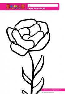 008 - Pagini de colorat cu flori - Bujor