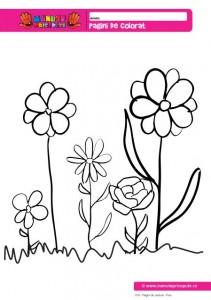 019 - Pagini de colorat - Flori