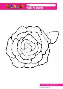 024 - Pagini de colorat - Flori