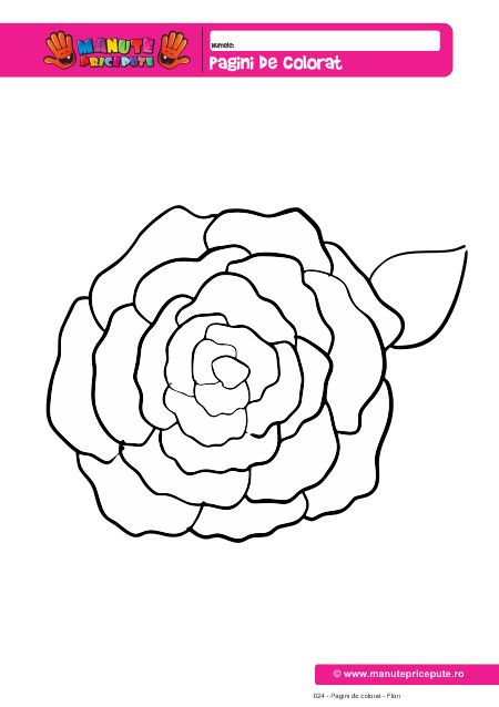 Floare de trandafir