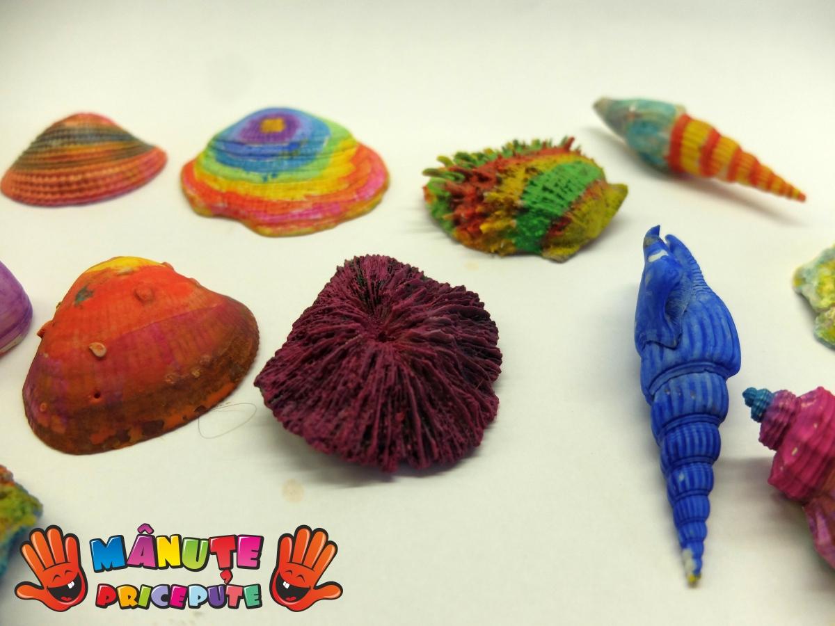 Scoici colorate