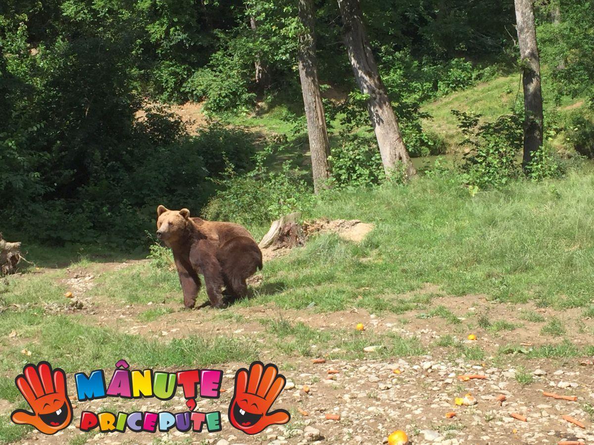 O lecție de viață  la Sanctuarul urșilor din Zărnești