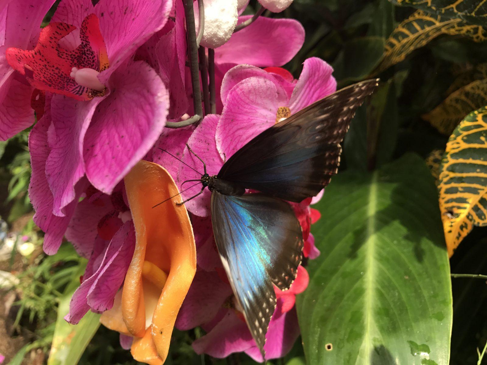 Casa fluturilor – Schmetterlinghaus Viena