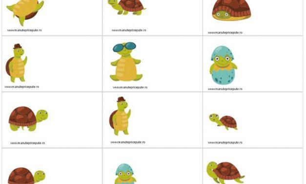 Clasa broscuțelor țestoase – ecusoane