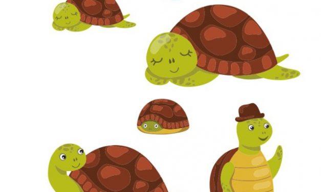 Clasa broscuțelor țestoase – decor